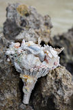 Wedding bridal bouquet made ​​of shells and pearls and other Stock Images