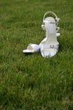 Wedding bridal shoes Stock Images