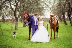 Wedding bride and groom walk with horses in the spring garden Stock Photos