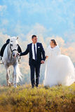 Wedding. Bride and groom with white horse Stock Photo