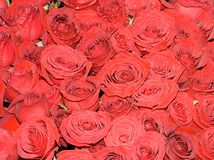 Wedding bride roses bouquet. Big bunch of a lot of red roses of a bride on a wedding Royalty Free Stock Photos
