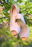 Wedding bride shoes on apple tree branch. Wedding receptions concept Royalty Free Stock Photography