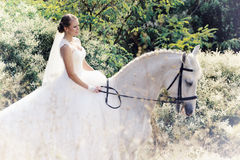 Wedding. Bride with white horse. Royalty Free Stock Photography