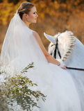 Wedding. Bride with white horse. Stock Photos