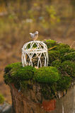 Wedding cage with a bird in the forest Stock Photos