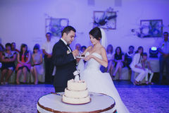 Wedding cake cutting Stock Image