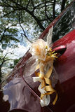 Wedding car. Red wedding car with roses bouquet tied on door handle Royalty Free Stock Photo