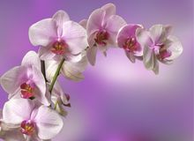 Wedding card or invitation with orchid background. Greeting card stock photos