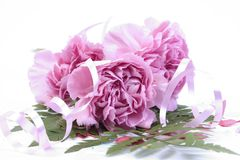 Wedding Carnations Royalty Free Stock Photo