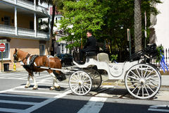 Wedding Carriage in Charleston, SC. Royalty Free Stock Image
