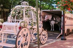 Wedding carriage and horse ready for assembly. stock photography