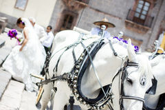 Wedding carriage with horses Royalty Free Stock Images