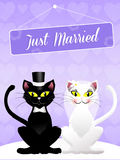 Wedding of cats Stock Images