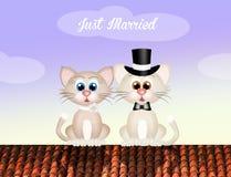 Wedding of cats Stock Photo