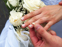Wedding composition. Groom putting ring on bride's finger Stock Images