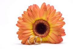 Wedding concept. Flower and rings Royalty Free Stock Image