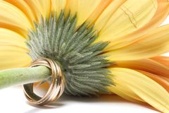 Wedding concept. Flower and rings Royalty Free Stock Photo