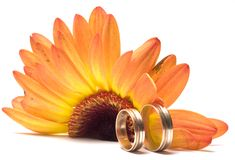 Wedding concept. Flower and rings Stock Images