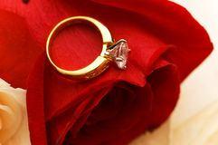 Wedding concept. Golden ring over red rose Stock Photos