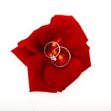 Wedding concept for invitation card. wedding rings in petals of Stock Photography