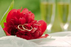 Wedding concept: red peony with wedding rings Stock Photos