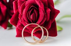 The wedding concept with rings and roses Stock Photos