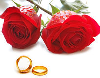 Wedding concept with roses. And rings Stock Image