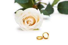 Wedding concept - roses and rings Royalty Free Stock Photo