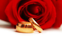Wedding concept with roses and two rings Royalty Free Stock Photos