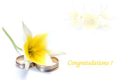 Wedding congratulations. Nice tulip and rings Royalty Free Stock Photography