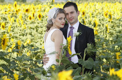Wedding couple. Young attractive wedding couple posing in a sunflower field stock photo