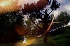 Wedding couple. Beautiful bride and groom. stock photography