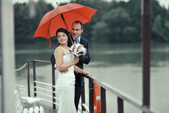 Wedding couple. Bride and groom Royalty Free Stock Images
