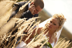 Wedding couple in eared field Royalty Free Stock Image