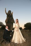 Wedding Couple with elephant : Look behind YOU! Royalty Free Stock Image
