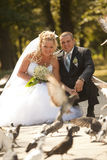 Wedding couple feeding doves Stock Photography
