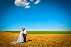 Wedding couple in the field Stock Photo