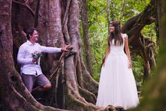 Wedding couple in forest Stock Image