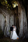 Wedding couple kissing. A bride and groom kissing under a large Banyan tree Royalty Free Stock Images
