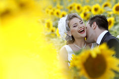 Wedding couple kissing. Wedding couple, bride and groom kissing in sunflower field