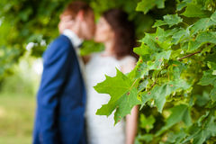 Wedding couple kissing Royalty Free Stock Images