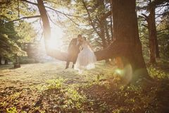 Bride and Groom sitting in tree kissing Stock Photos