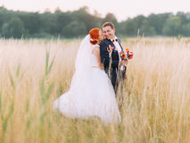 Wedding couple in love enjoy a moment of happiness and lovingly look at each other on wheat field Royalty Free Stock Image