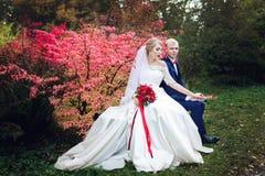 Wedding couple near the red bush Stock Photo