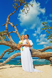 Wedding couple. Wedding near tree on a beach Royalty Free Stock Photo
