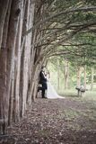 Bride and Groom standing along row of tees Royalty Free Stock Image