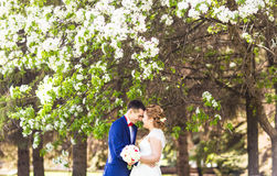 Wedding couple in spring nature Royalty Free Stock Photography