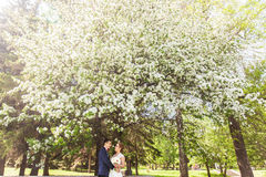 Wedding couple in spring nature Stock Images