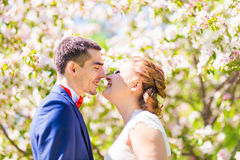 Wedding couple in spring nature Royalty Free Stock Image