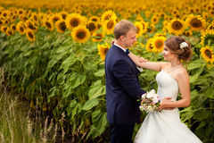 Wedding couple standing on field of sunflowers Royalty Free Stock Image